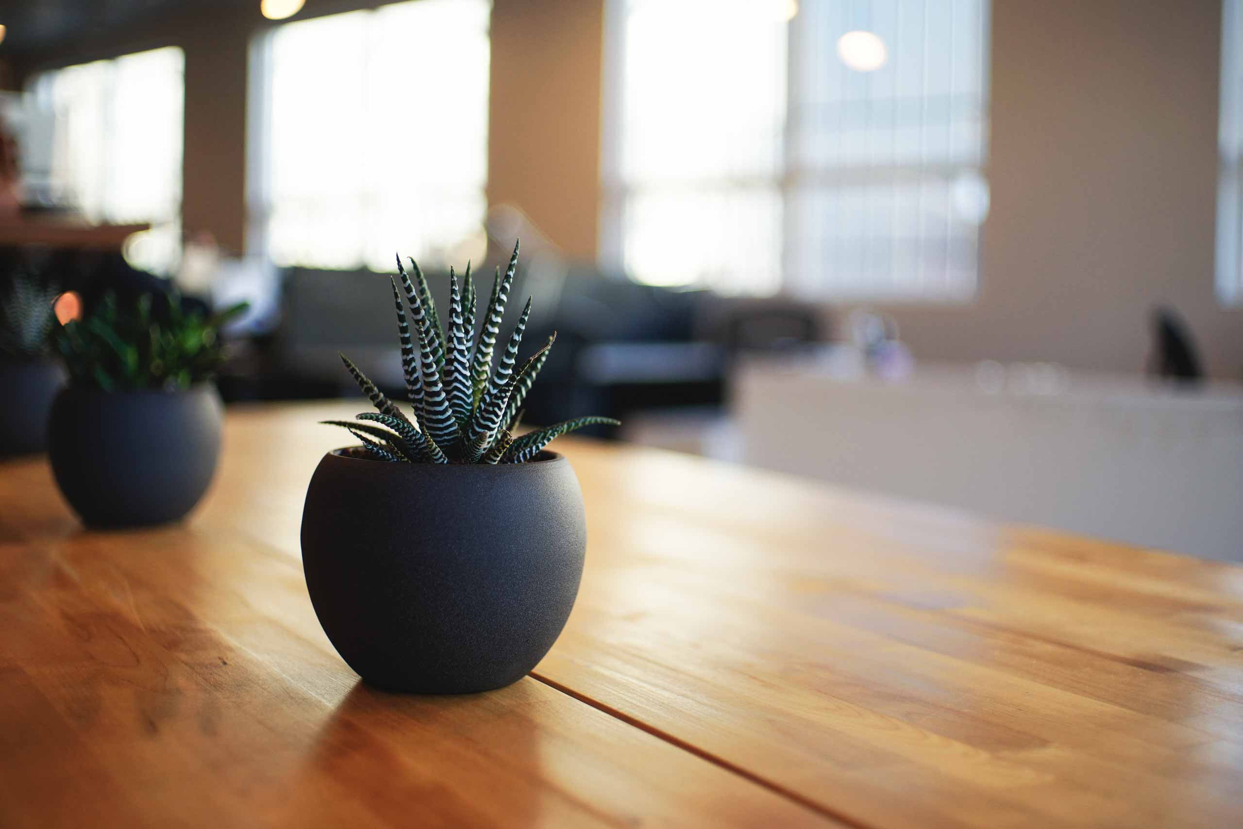 A warm, inviting, and well lit room sees two potted succulent plants placed atop a wooden table.